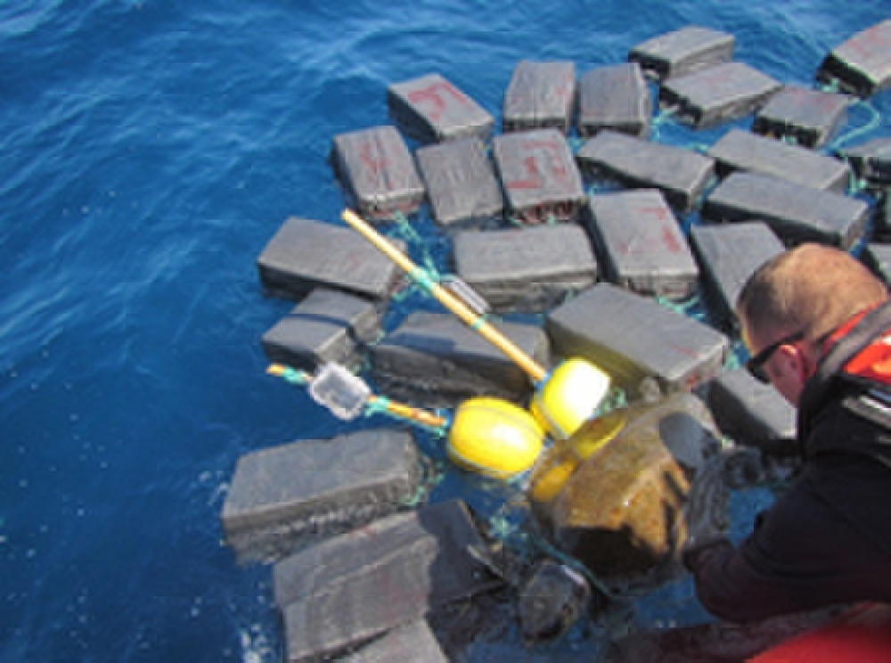 sea turtle caught up with cocaine bales