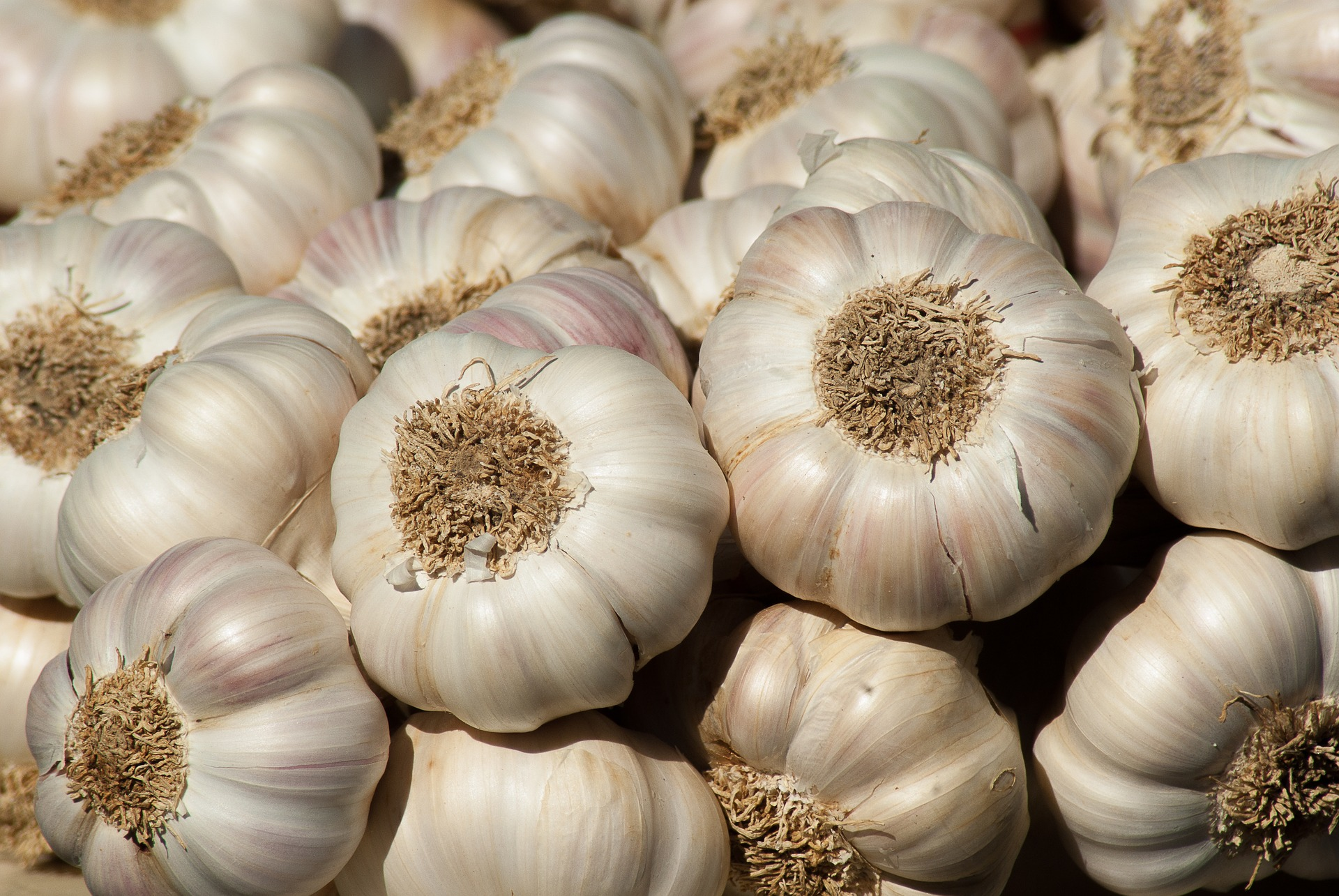 crackdown on garlic smugglers