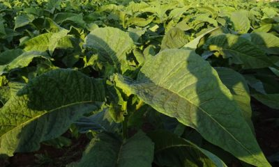 Australia's Illicit Tobacco Taskforce seizes six tonnes