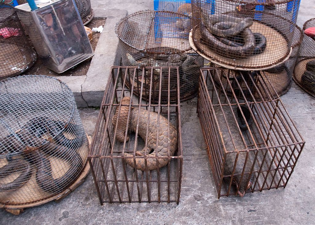 wildlife traffickers and drug smugglers