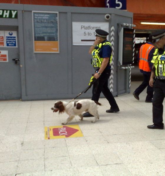 contract on sniffer dog's head