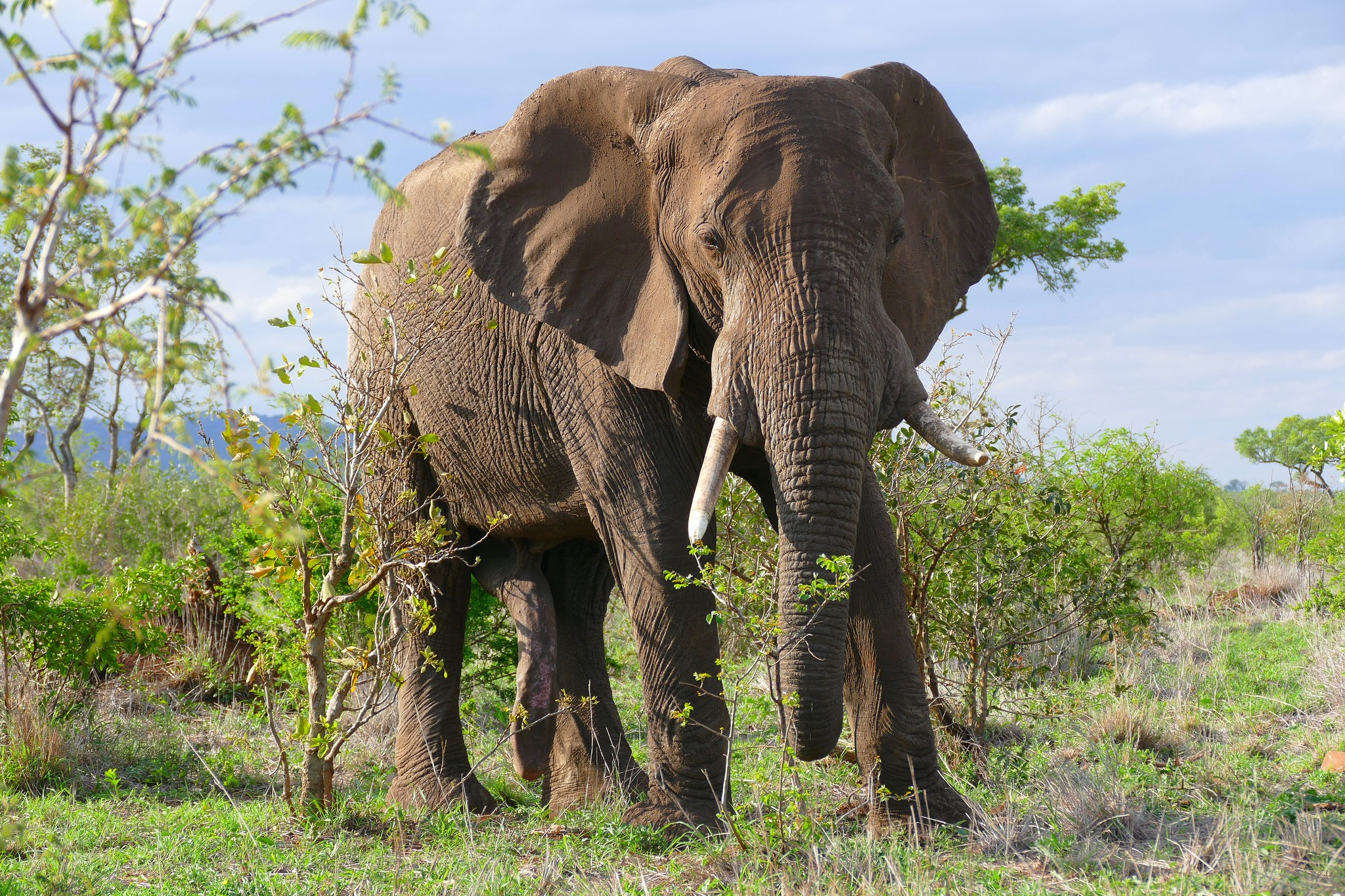 elephant poaching in Africa falls 60%