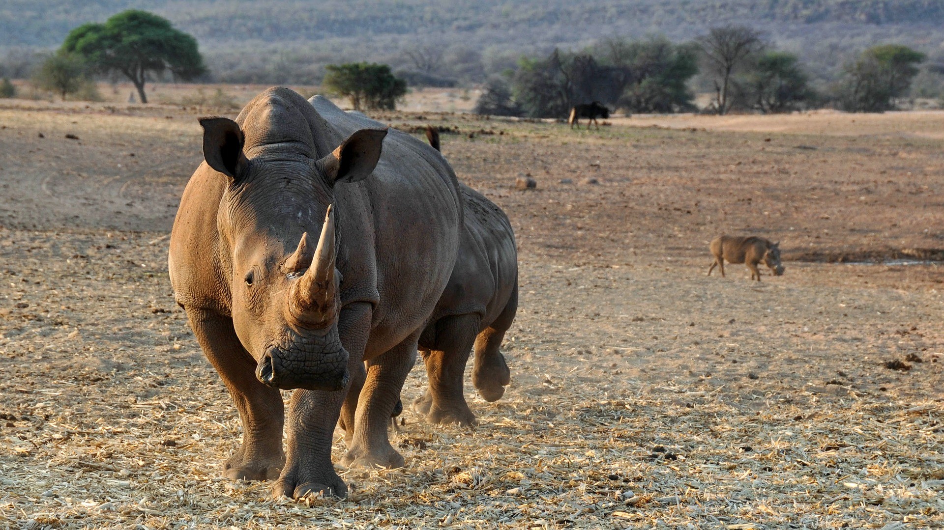 rhino poaching investigation