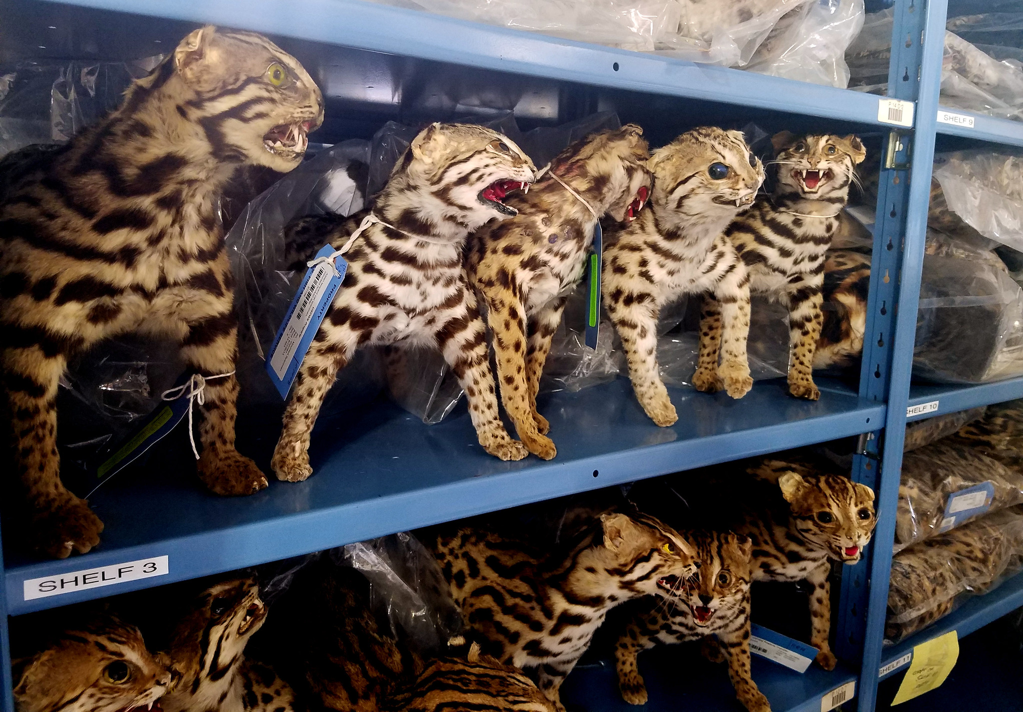 online wildlife traffickers