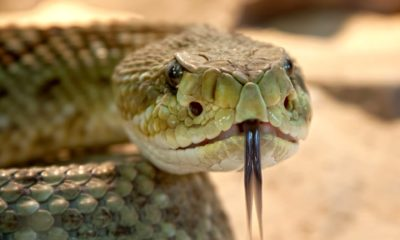crackdown on reptile smuggling