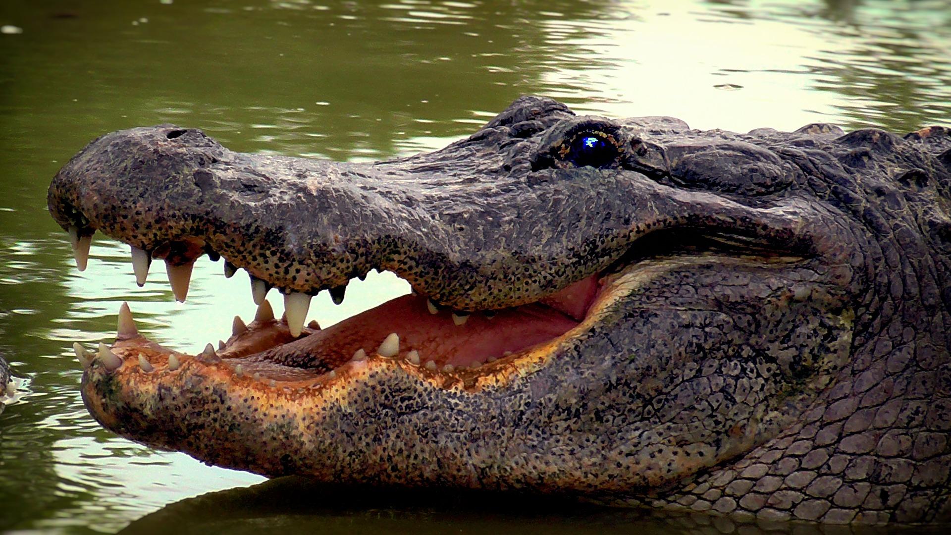 meth gators