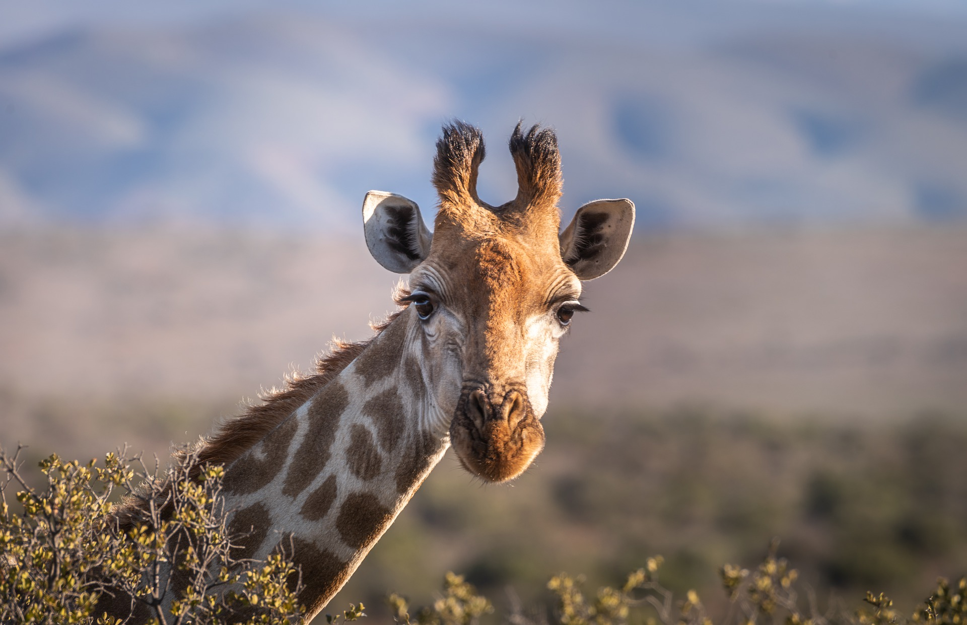 greater protection for giraffes from poachers