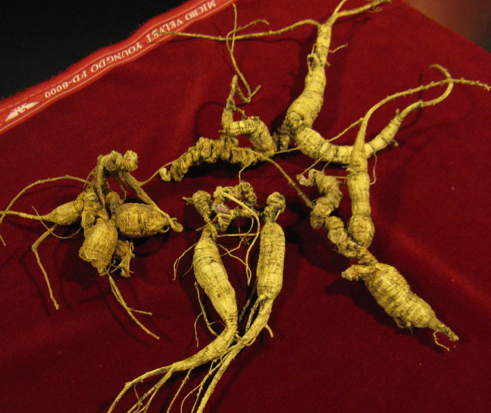 ginseng poaching offences