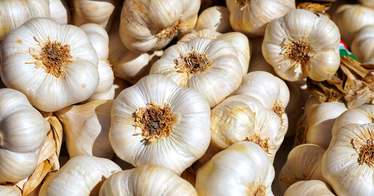 smuggling illicit garlic shipments into Australia