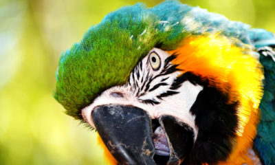 one in five species traded on global wildlife market