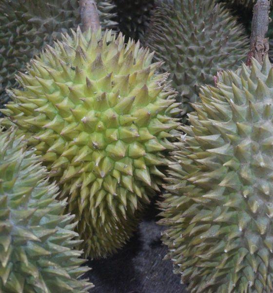 heroin hidden in durian fruit