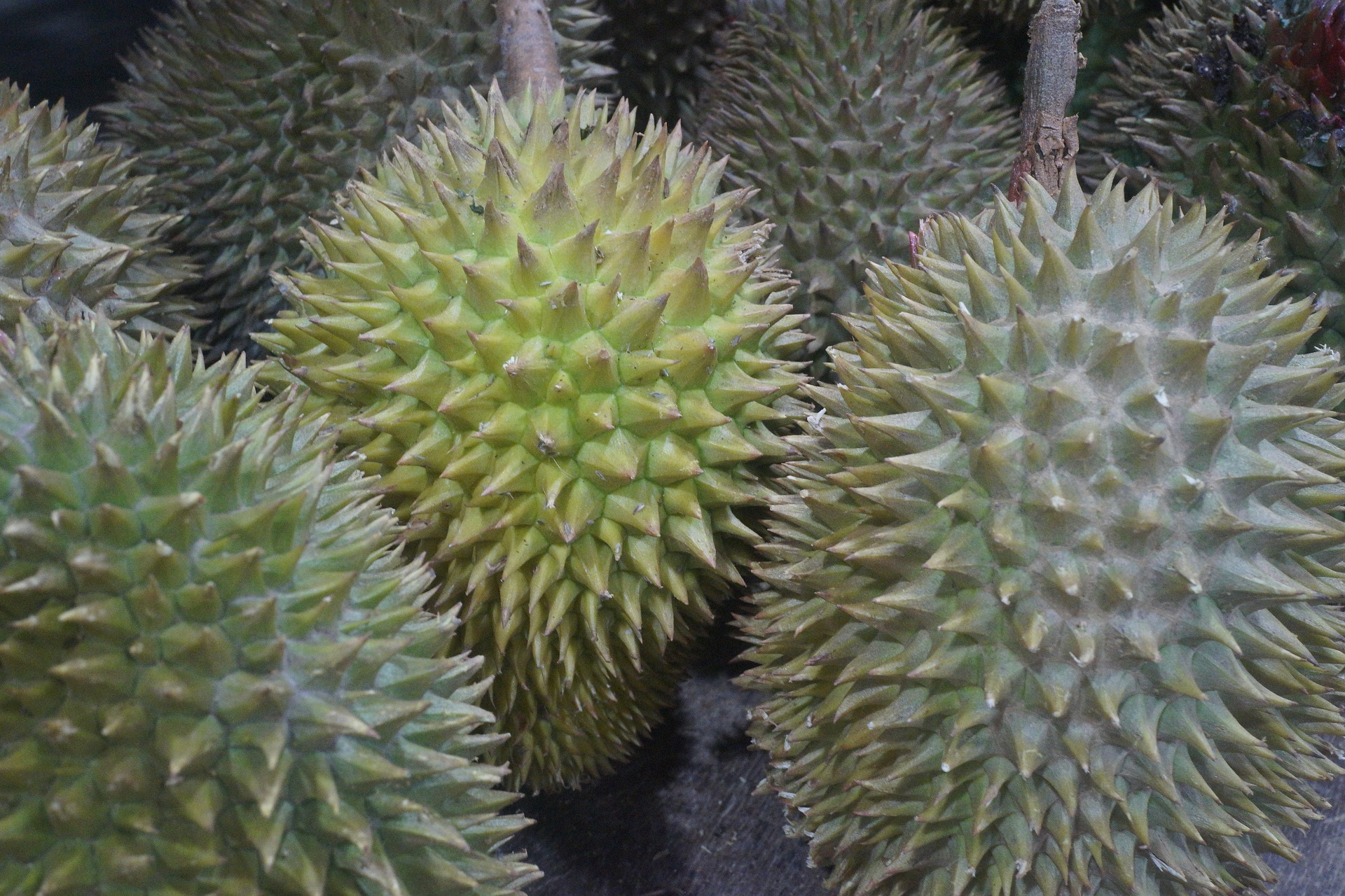 heroin hidden in durian fruit