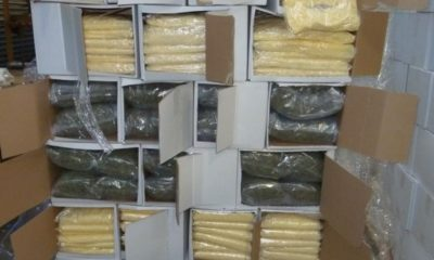 half tonne of cannabis hidden in grated pizza cheese