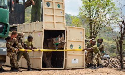 poachers targeting endangered black rhinos