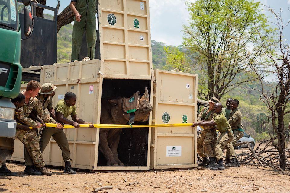 poachers targeting endangered black rhinos