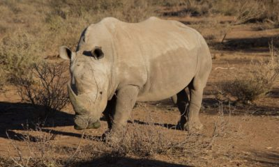 Rhino poaching in South Africa declined for fifth consecutive year