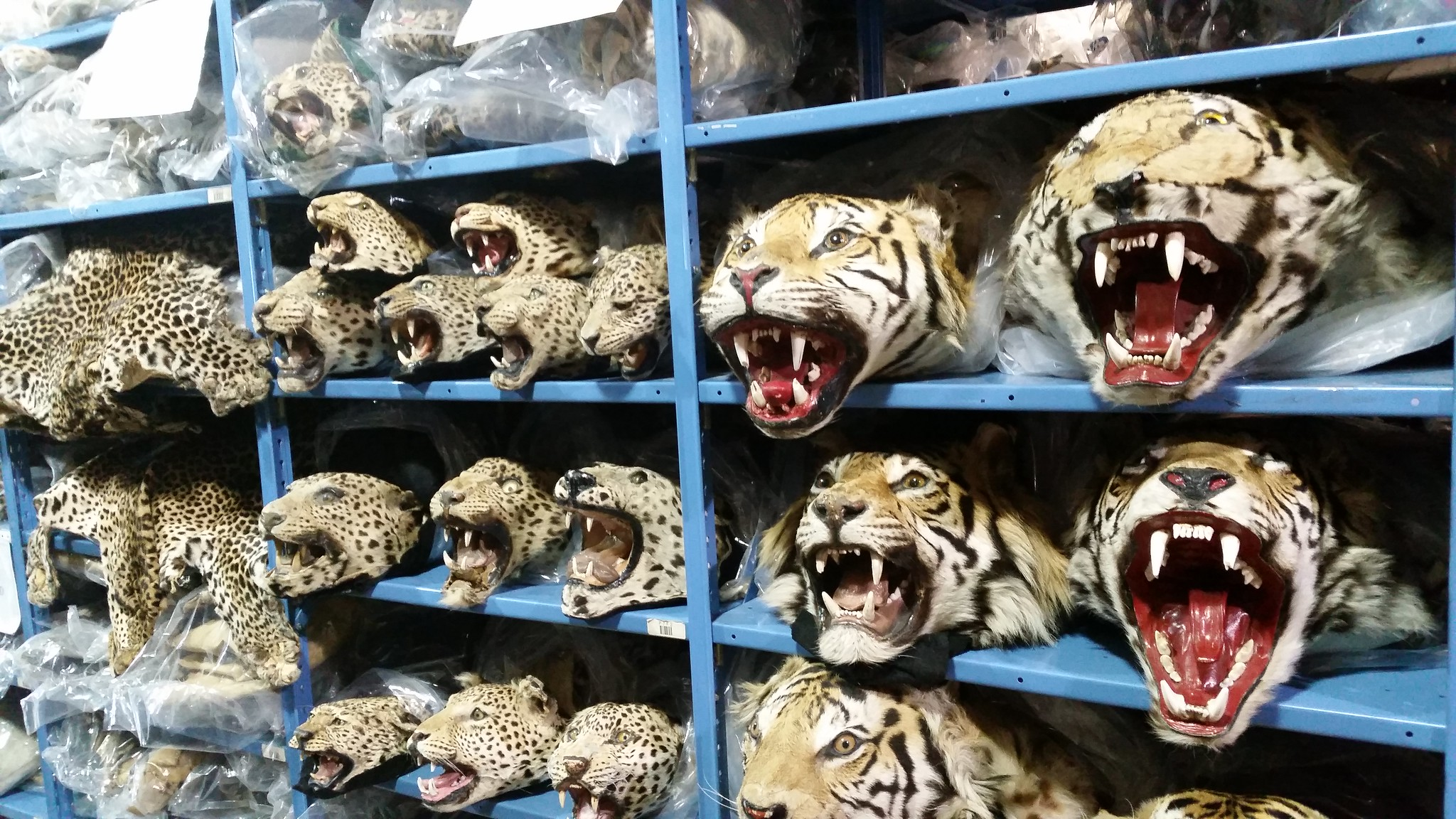 Global Coalition to End Wildlife Trafficking Online takes down or blocks three million wildlife trafficking listings
