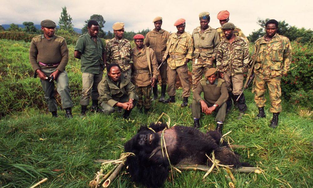 braconnage-gorilles-wwf