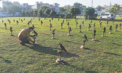 trafic de faucons