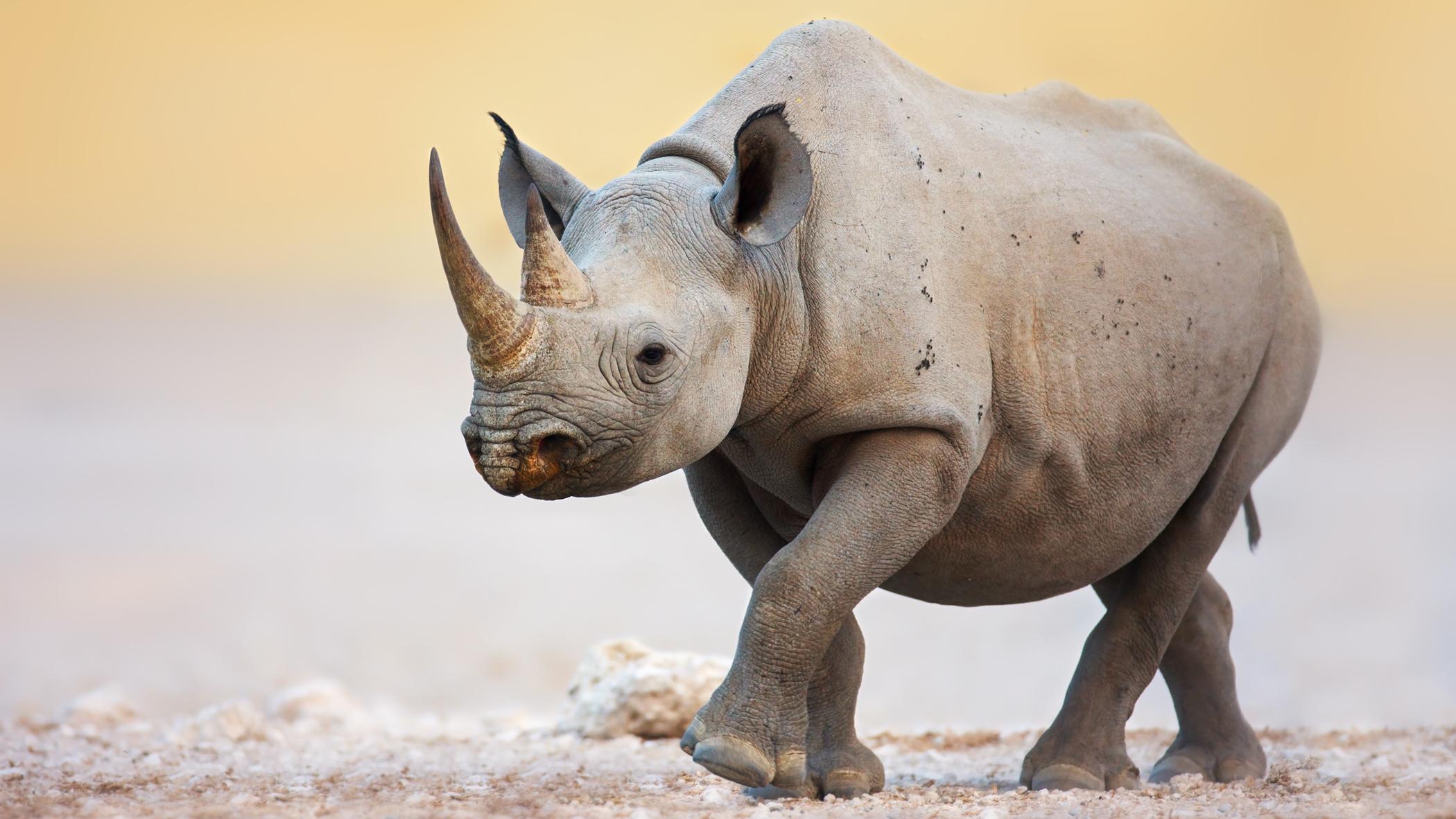 extinction des espèces
