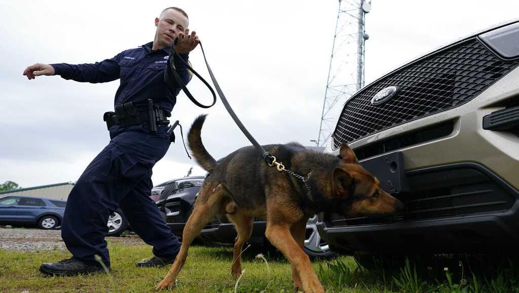 chiens de détection