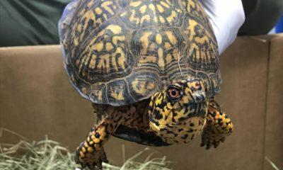 trafiquant de tortues