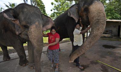 Trafic d'éléphants
